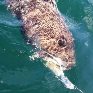 Large Squid Heads (Swing Hook)